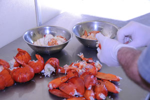 lobster processing