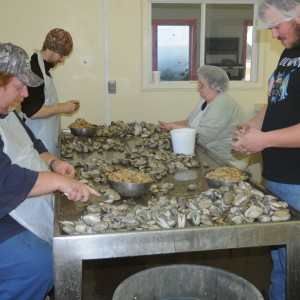 hand-shucking at MMP